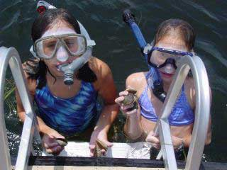 Crystal River Scalloping